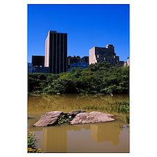 Rocks in a pond, Central Park, Manhattan, New York