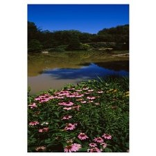 Flowers near a pond, Central Park, Manhattan, New