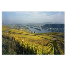 Vineyards near a town, Rudesheim, Rheingau, German