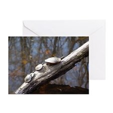 Painted Turtles Greeting Cards (Pk of 10)