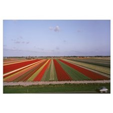 High angle view of cultivated flowers on a field,