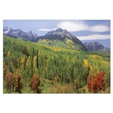 High angle view of a forest, Gunnison National For