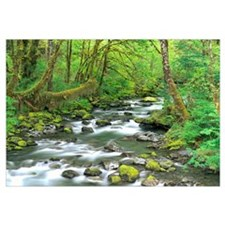 Washington, Olympic National Park, Stream of water