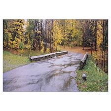 Trees along a road, Chestnus Ridge Park, Orchard P