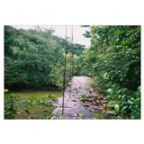Suspension bridge across a river in a forest, Cost