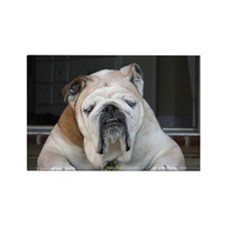 Sleeping Bulldog Rectangle Magnet (10 pack)