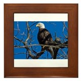 Majestic Eagle Framed Tile