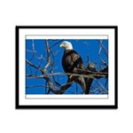 Majestic Eagle Framed Panel Print