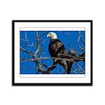Majestic Eagle Framed Panel Print