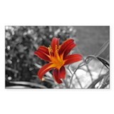 Day Lily (Rectangular)
