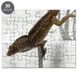 Speckled Lizard Puzzle