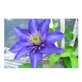 Clematis Flower Postcards (Package of 8)