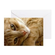 Coy Cat  Greeting Cards (Pk of 10)