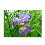 Wild Iris Postcards (Package of 8)