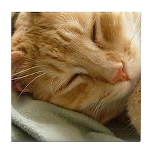 Sleeping Kitty Art Tile