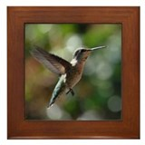 Hummingbird 0003 - Framed Tile