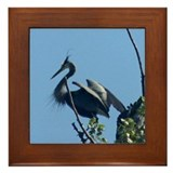 Crested Beauty Framed Tile