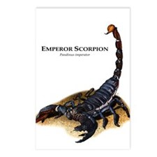 Emperor Scorpion Postcards (Package of 8)