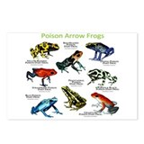 Poison Dart Frogs of the Amazon Postcards (Package