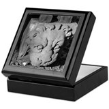 Stone Lion Keepsake Box
