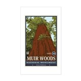 Muir Woods 3 Sticker (Rectangle)