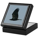 Young Eagle Flying Keepsake Box