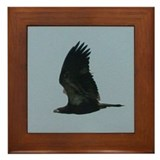 Young Eagle Flying Framed Tile