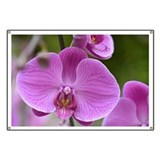 Purple Orchid Banner