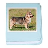 Swedish Vallhund 9Y767D-057 baby blanket