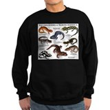 Salamanders of North America Sweatshirt