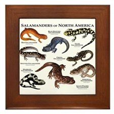 Salamanders of North America Framed Tile