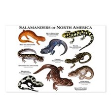 Salamanders of North America Postcards (Package of