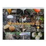 Eastern North America Mushrooms 2