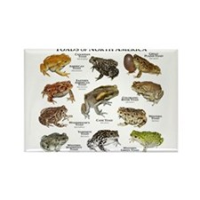 Toads of North America Rectangle Magnet