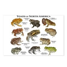 Toads of North America Postcards (Package of 8)