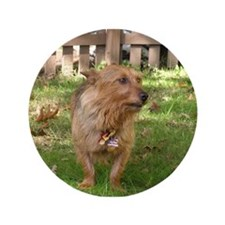 "Australian Terrier 3.5"" Button (100 pack)"
