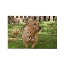 Australian Terrier Rectangle Magnet (100 pack)