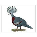 Victoria Crowned Pigeon Small Poster