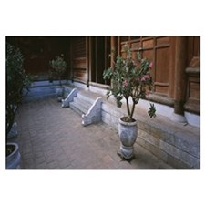 Vietnam, Hanoi, Temple of Literature, Potted plant
