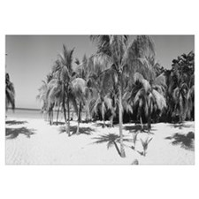 Palm trees on the beach, Negril, Jamaica