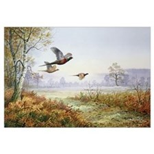 Pheasants in Flight (w/c)