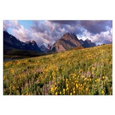 Flowers in a field, Glacier National Park, Montana