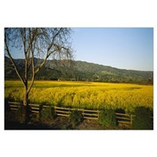 Crops in a field, Napa Valley, California