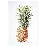 Pineapple, 1997 (w/c on paper)