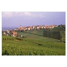 France, Alsace, Zellenberg, vineyards