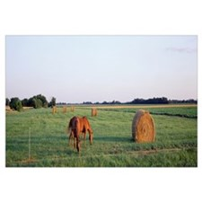 Illinois, Marion County, horses and hay