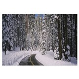 Empty road passing through a forest, Yosemite Nati