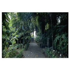 Walkway in a garden, Funchal, Madeira, Portugal