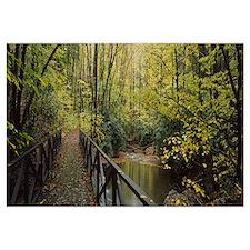 Footbridge Over A Pond In A Forest, Cucumber Run,
