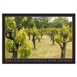 napa valley wine country Wall Art